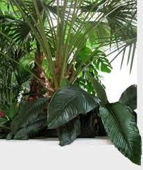 home interior plants home interior plants tropical plants mediterranean plants