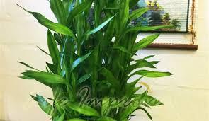 plant for bedroom plant 5d47d7ac2829eaf34ec4084d6c31ab30 dark blue wall living