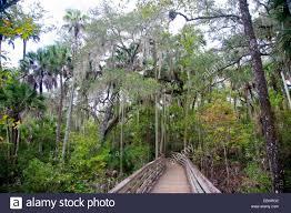 Florida vegetaion images Florida vegetation epiphyte stock photos florida vegetation jpg