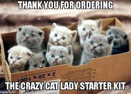 Crazy Cat Meme - thank you for ordering the crazy cat lady starter kit