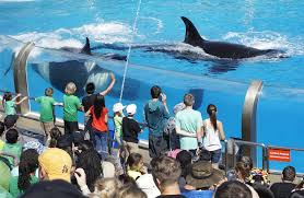Sea World San Diego Map by Seaworld San Diego Was The Only Top North American Theme Park To