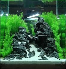 How To Aquascape A Planted Tank 449 Best Aquascaping Images On Pinterest Aquarium Ideas