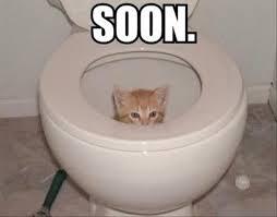 Meme Toilet - image a cat in the toilet soon meme jpg the loud house