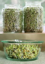 best plants for your indoor vegetable garden apartminty