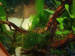 fatedev com part 1 22 litre nano aquarium tank design all