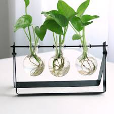 hanging plant glass vase terrarium black iron stand holder desk
