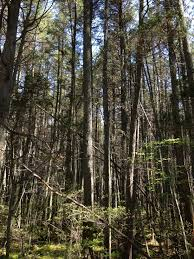 plants native to new jersey pine barrens new jersey wikiwand