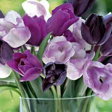 Colors Of Purple Best 25 Purple Tulips Ideas On Pinterest Tulip Pretty Flowers