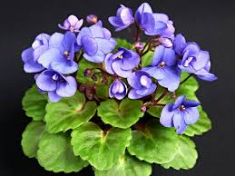 african violet grow light plant lights how to choose the best indoor lighting for plants hgtv