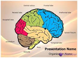 Ct Anatomy Of Brain Ppt Tag Ct Brain Anatomy Powerpoint Anatomy Human Chart