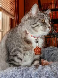 a roundup of pet presents lincoln animal ambassadors