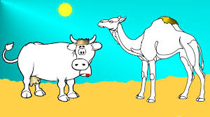 cow and camel coloring pages for kids youtube