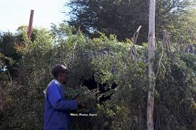 How To Build Hunting Blind Marv Bow Hunting Kudu In South Africa Mkulu African Hunting Safaris
