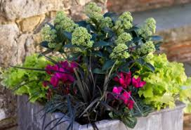 how to create a beautiful winter plant container
