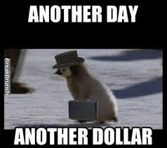Funny Penguin Memes - 26 best ooh penguins images on pinterest penguin penguins and