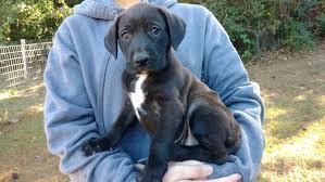 general dog care prattville autauga humane society