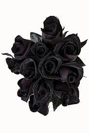 black roses 24 stems fresh cut black roses from flower