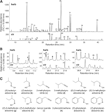 Two Herbivore Induced Cytochrome P450 Enzymes Cyp79d6 And Cyp79d7