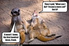 Mere Cat Meme - tuesday 16 08 2016 today is national tell a joke day the daily