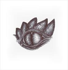 25 eye drawings free psd vector eps drawings download free