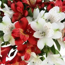 alstroemeria flower flower package alstroemeria
