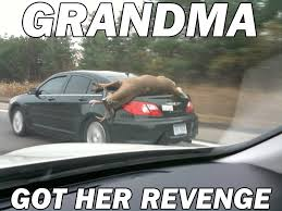 Meme Grandma French - 15 very funny reindeer meme pictures and photos