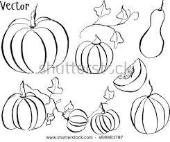 set pumpkin hand drawing ink vegetable stock vector 469881797