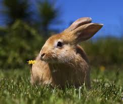 bunny benefits 10 reasons rabbit pet