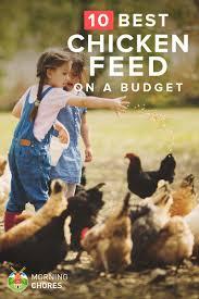 26 cheap yet nutritious chicken feed that won u0027t break your wallet