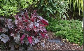 How To Mulch Flower Beds Why I Landscape Fabric An Unfair And Unbalanced Look At Weed