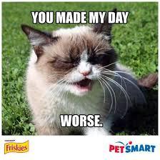 Make Your Own Cat Meme - 598 best grumpy cat humor 龴 龴 images on pinterest grumpy