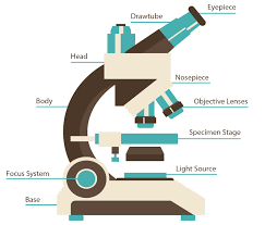 Parts Of A Compound Light Microscope The B U0026h Microscope Buying Guide B U0026h Explora