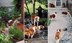 Backyard For Dogs Landscaping Ideas Brilliant Garden Ideas For Dogs Fun With Design Inspiration