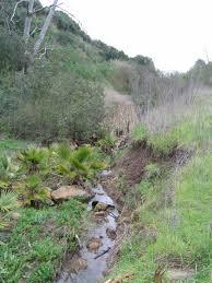 invasive non native plants water quality u2013 www rosecreekwatershed org