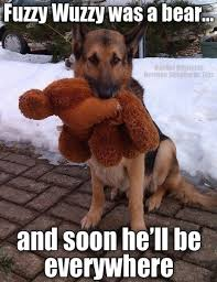 Funny German Shepherd Memes - these silly german shepherds just want to brighten your day