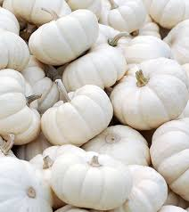 white pumpkins 15 best benefits and uses of white pumpkin for skin hair and health
