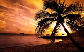 palm tree beach wallpaper gzsihai com