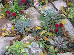 Rock Garden Succulents Succulent Rock Garden Garden Ideas Pinterest Succulent Rock
