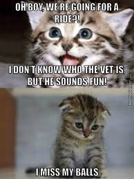 Memes Fun - vet memes best collection of funny vet pictures