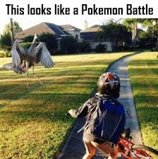 Pokemon Battle Meme - dopl3r com memes this looks like a pokemon battle