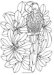642 coloring pages images drawings
