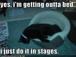 Get Out Of Bed Meme - funny cat getting out of bed dump a day