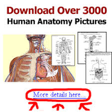 Directional Terms Human Anatomy Directional Terms Physiology Americorps Health Blog