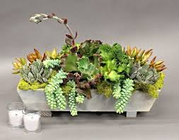 succulent arrangements succulent arrangement