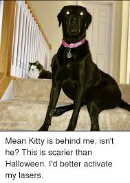 Mean Kitty Meme - 25 best memes about mean kitty mean kitty memes