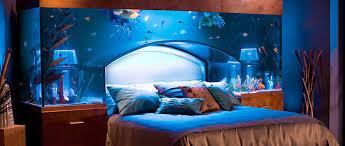 designer aquarium aqua design fish fish enthusiast