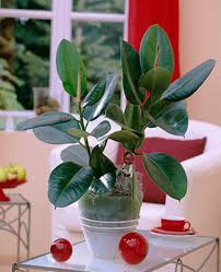 add house plants to home decor to improve air quality