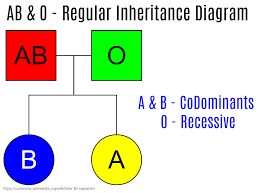 what is difference between codominance and incomplete dominance