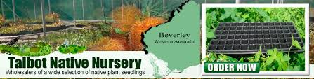 native plant nursery sydney talbot nursery