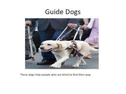 Dogs For The Blind Jobs Jobs Dogs Do